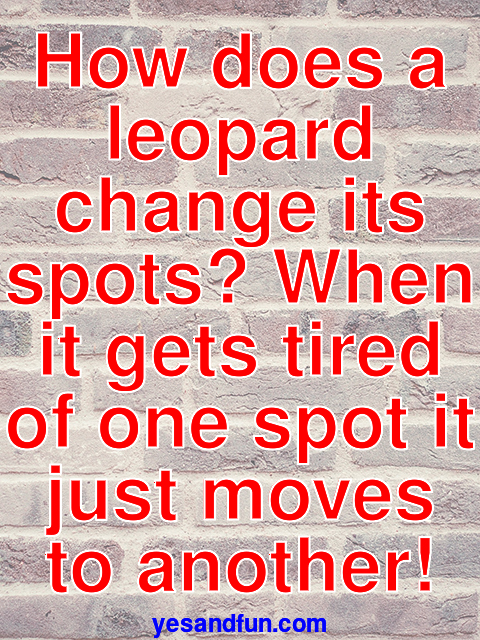 How does a leopard change its spots? When it gets tired of one spot it just moves to another!