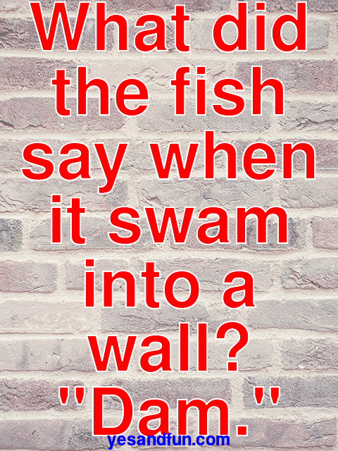 What did the fish say when it swam into a wall? Dam.