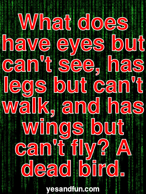 What does have eyes but cant see, has legs but cant walk, and has wings but cant fly? A dead bird.